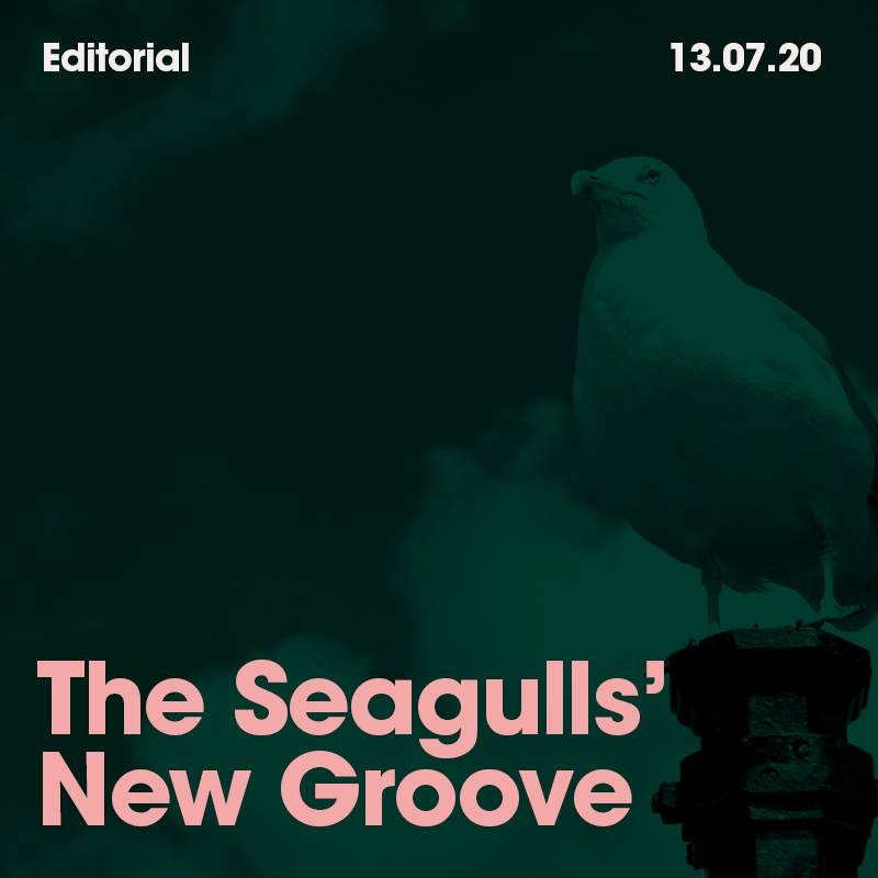 The Seagulls' New Groove